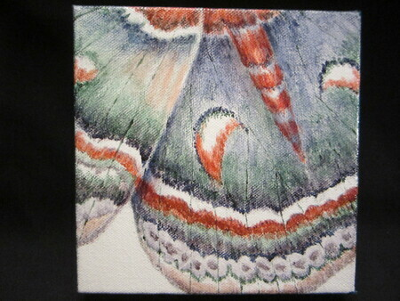 Jeweled Wings #11