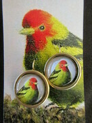 Western Tanager, large round